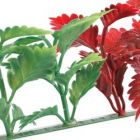 Dalebrook Red & Green Coleus Divider - (12 Pack)