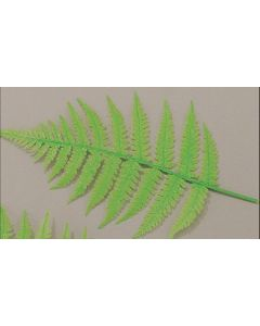 Fern Leaves For Display (10 Pack)