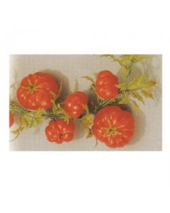 Tomatoe Display Garland